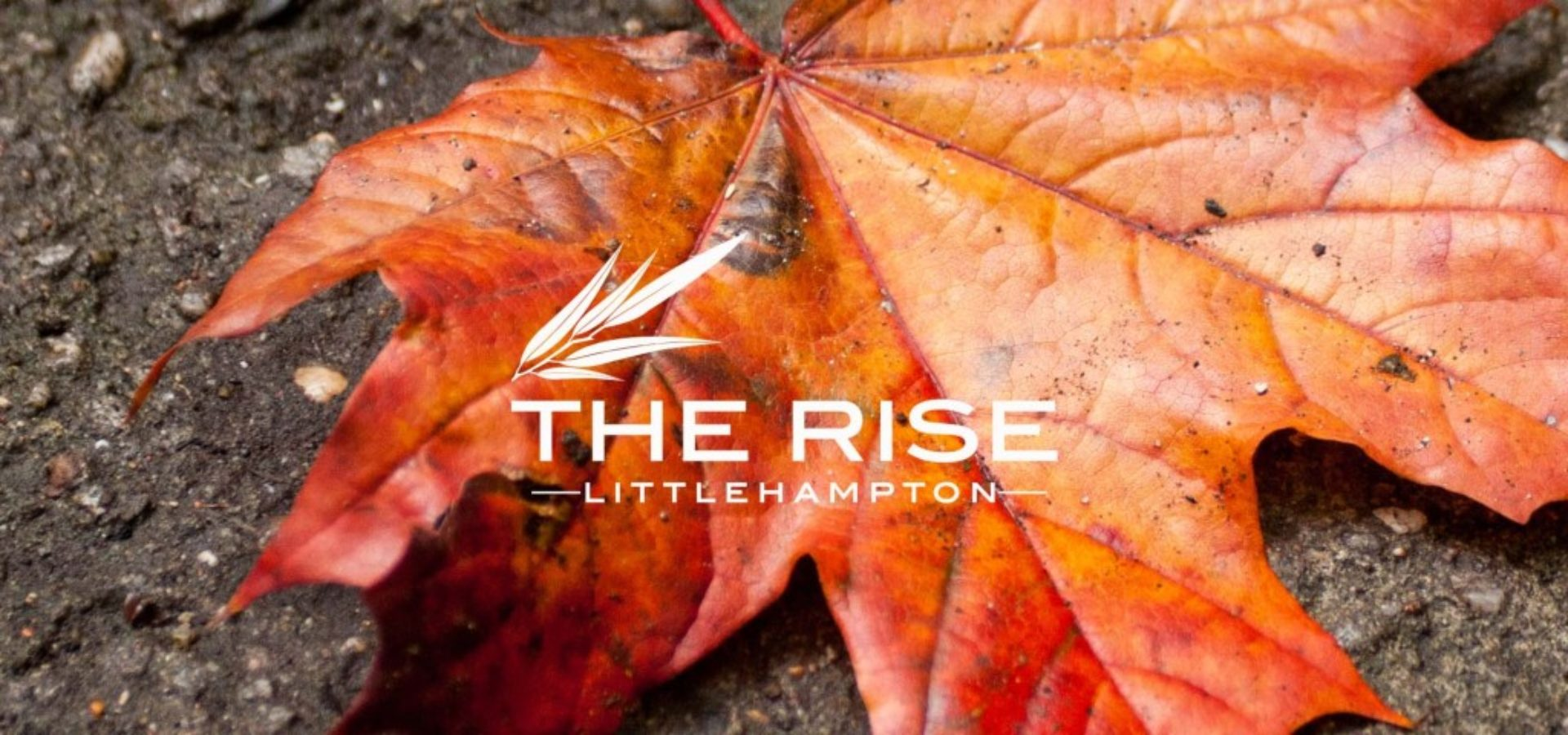 The rise Autumn leaf